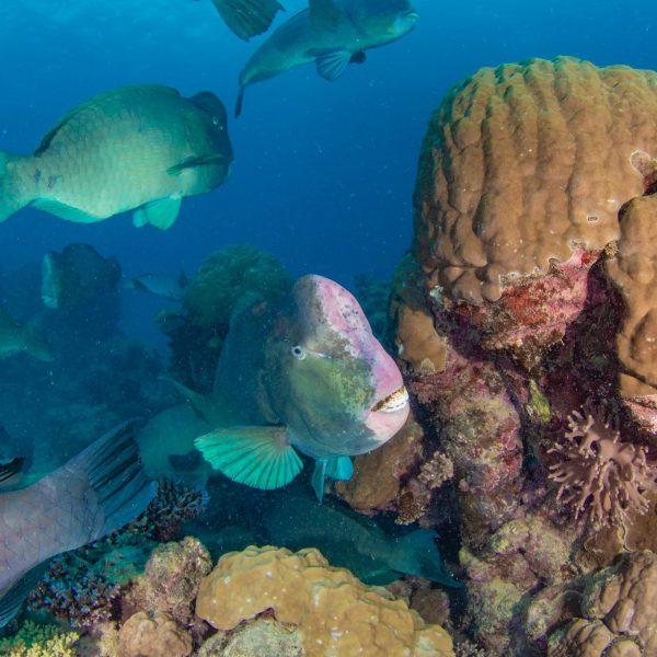 Great Barrier Reef Animals