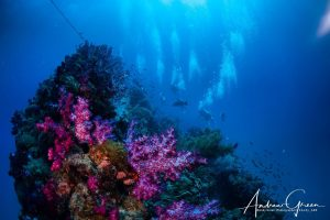 SS Yongala Top Ten Wreck Sites
