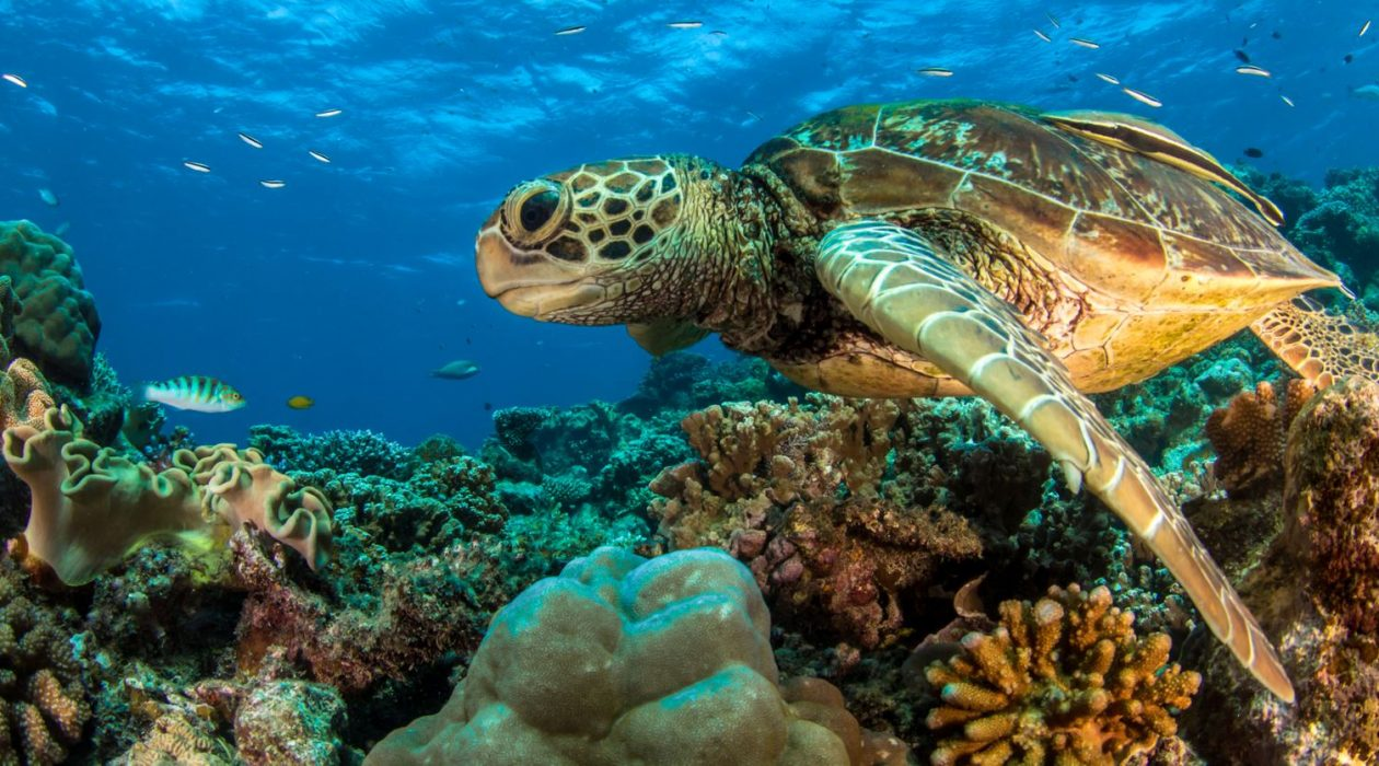Which Reef Is Best? Outer Great Barrier Reef vs Inner Great Barrier Reef tours